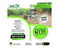 Farmland Investment @N120k Per Plot - Image 2