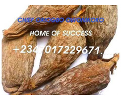 The best powerful spiritual father of herbalist and native doctor +2347017229671... - Image 1