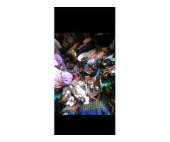 The real best herbalist in Nigeria - Image 4